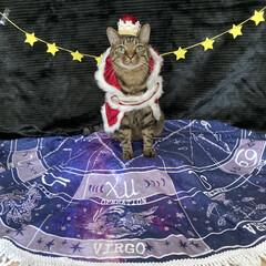 誕生日フォト/コスプレ/誕生日/LIMIAペット同好会/猫 今日はルナの6歳のお誕生日です💕 元気に…(2枚目)