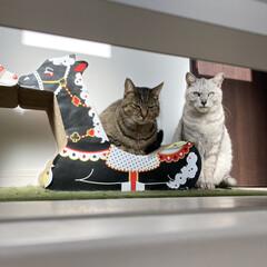 cat/猫/nekoto_/キリンの爪とぎベッド/爪とぎ/猫のいる暮らし/... 朝、日当たり良好な廊下に爪とぎを並べたら…(2枚目)