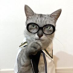 百均/ペット用品/cat/猫/ダイソー/DAISO/... DAISOでペット用の眼鏡を見つけました…