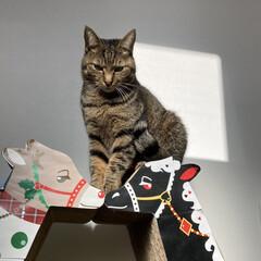 cat/猫/nekoto_/キリンの爪とぎベッド/爪とぎ/猫のいる暮らし/... 朝、日当たり良好な廊下に爪とぎを並べたら…(3枚目)