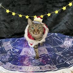 誕生日フォト/コスプレ/誕生日/LIMIAペット同好会/猫 今日はルナの6歳のお誕生日です💕 元気に…(3枚目)