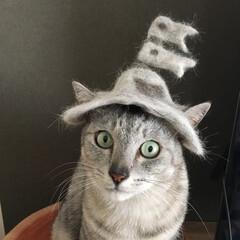LIMIAペット同好会/愛猫/インテリア/こどもの日/端午の節句/おうち時間/...  ミロとルナの抜け毛で作った、 鯉のぼり…(1枚目)