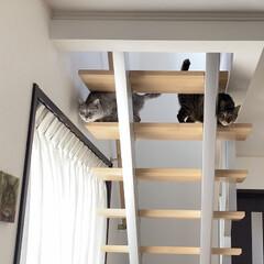 デザイン階段/cat/猫/LIMIAペット同好会/階段/廊下 イベントに参加。 我が家の「デザイン階段…