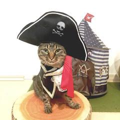 海賊ごっこ/LIMIAペット同好会/ペット/猫/にゃんこ同好会/うちの子自慢 海賊になったにゃーん!! かわいいかにゃ?