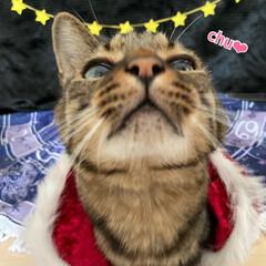 誕生日フォト/コスプレ/誕生日/LIMIAペット同好会/猫 今日はルナの6歳のお誕生日です💕 元気に…(4枚目)