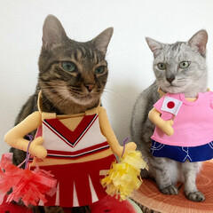 LIMIAペット同好会/猫/オリンピック オリンピックが始まりましたね。 テレビの…(1枚目)