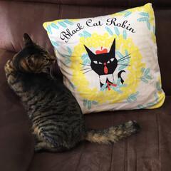 お裁縫/猫/黒ねこ意匠/手作りクッション/雑貨/リビングあるある 大好きなイラストレーター黒ねこ意匠さんの…