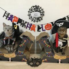 ハロウィン/LIMIAペット同好会/猫/100均deハロウィン セリア様の仮面! 猫にちょうどいいサイズ…