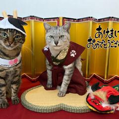 あけましておめでとうございます/2021年/今年もよろしくお願いします/猫/LIMIAペット同好会 あけましておめでとうございます。 今年も…