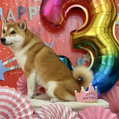 誕生日飾り/わんこ同好会/LIMIAぺット同好会/柴犬 ぼく定春▼・ᴥ・▼🎶 ✴︎ 9月6日で …
