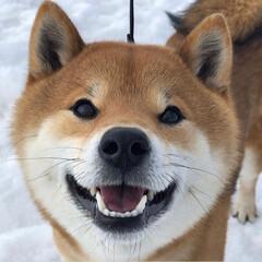 豆柴/柴犬/笑顔/LIMIAペット同好会/フォロー大歓迎/ペット/... 今日もいい天気ですね🌞🌈 こたは、今日も…(1枚目)