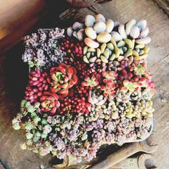 琥珀糖/リメ缶/アルコールランプ/レボリューション/多肉植物 本日は、食材仕入れ&趣味の材料調達DAY…(1枚目)