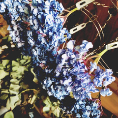 紫陽花/菊芋/かぶら大根 ここ、2.3日寒〜い朝‼︎ 出勤前にアレ…(3枚目)