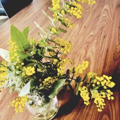 多肉葉挿し/ミモザ やっと我が家のミモザが咲きましたー! 咲…(1枚目)