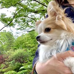 グリーン/お散歩/公園/わんこ同好会/ペット/犬/... 公園に連れてってもらったよ🐶✨✨