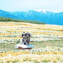 春のフォト投稿キャンペーン/LIMIAペット同好会/わんこ同好会/おでかけ/旅行/風景/... 信州花フェスタ2019