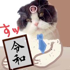 春のフォト投稿キャンペーン/ありがとう平成/令和の一枚/フォロー大歓迎/GW/LIMIAペット同好会/... わたしのGWは… 愛猫の写真でこんなこと…