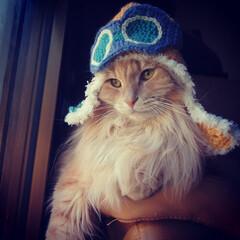 猫/ペット/長毛猫/茶トラ/ハンドメイド/ニット帽/... 我が家のおっとり息子「福」です。 気持ち…