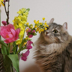 猫/ペット/LIMIAペット同好会/花/うちの子ベストショット/うちの子自慢/... 我が家のお姫様😹はなちゃん✨ お花が大好…