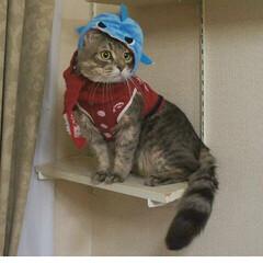 猫/被り物/アメリカンカール/ハンドメイド/マフラー/ペット/... 我が家のパパ猫「アラン」です。 パーカー…