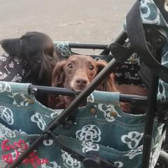 花火/愛犬/わんこなしでは生きていけません/わんこ仲間募集/犬好きな人と繋がりたい/犬好き/... 先週の土曜日に 花火を見てきました(o´…(2枚目)