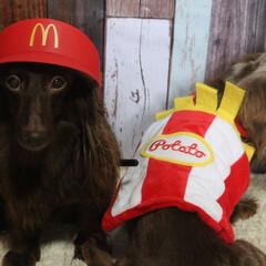なりきりマック/犬のいる暮らし/犬のいる生活/わんこなしでは生きていけません/わんこ仲間募集/わんこ/... マッククルーの研修中でち⸜❤︎⸝ 研修…(2枚目)