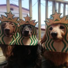 スタバ紙袋リメイク/スタバ/わんこなしでは生きていけません/わんこ仲間募集/犬好きな人と繋がりたい/犬好き/... これ被って スタバドライブスルーに 行っ…