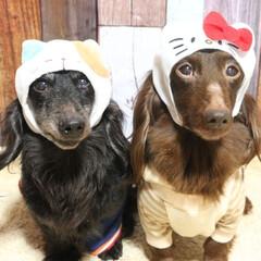 ブラックソリッド/チョコソリッド/わんこなしでは生きていけません/犬好きな人と繋がりたい/シニア犬/多頭飼い/... 2月22日 ニャンニャンニャン 猫の日だ…