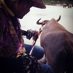 由布島/島巡り/沖縄/雨季ウキフォト投稿キャンペーン/おすすめアイテム/令和の一枚/... 〜由布島〜  三線の音色を聴きながら水牛…