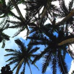 石垣島/沖縄/景色/カメラ/LIMIAおでかけ部/旅行/... これは石垣島に行った時の写真。 上を見上…