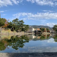 「マリンと行った以来、久しぶりに奈良公園へ…」(5枚目)