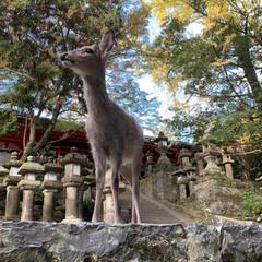 「マリンと行った以来、久しぶりに奈良公園へ…」(1枚目)