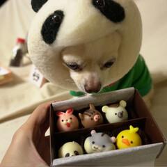LIMIAペット同好会/フォロー大歓迎/ペット/ハンドメイド/犬/わんこ同好会/... どれにしようかな? と頂いたチョコを開け…(1枚目)