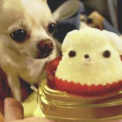 LIMIAペット同好会/LIMIAおでかけ部/ペット/犬/わんこ同好会/スイーツ/... 某コンビニで チワワのケーキを見つけて …(1枚目)