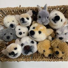 ハンドメイド/手作り/ハンドメイド作品/LIMIA手作りし隊/第2回わたしのハンドメイド/犬ぽんぽん/... 犬ぽんぽんを作りました。 毛糸でぽんぽん…(1枚目)