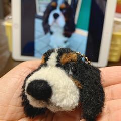 ハンドメイド/手作り/ハンドメイド作品/LIMIA手作りし隊/第2回わたしのハンドメイド/犬ぽんぽん/... 犬ぽんぽんを作りました。 毛糸でぽんぽん…(4枚目)