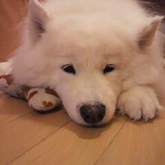 犬派 3年前に虹の橋を渡ってしまった愛犬の写真…