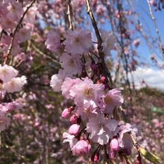 春の一枚 花見に🌸いきました でもすごーく寒くて😆