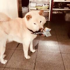 犬派 (1枚目)