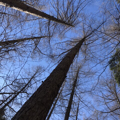 風景 登山の途中に、疲れて空を見上げると木立の…