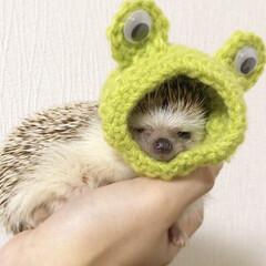 はりねずみ/ハリネズミ/hedgehog/かぶりもの/雨/カエル/... カエルさんにだってなれるんだもん🐸