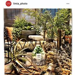 フェイクグリーン/リセッシュ/花王/インダストリアルインテリア/男前インテリア/男前インテリア雑貨/... limia_photoにて取り上げて頂き…