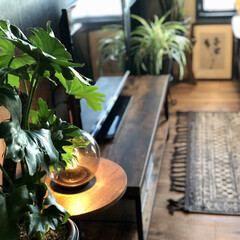 団地暮らしを愉しむ/団地暮らし/団地DIY/観葉植物インテリア/植物のある暮らし/インダストリアルインテリア/... 今日は昨日の雨が嘘のような秋晴れの一日で…(2枚目)