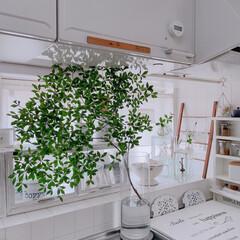 水耕栽培/ガラスブロック/ホワイトインテリア/100均リメイク/ドウダンツツジ/DIY/... おはようございます  キッチンの出窓にラ…(1枚目)