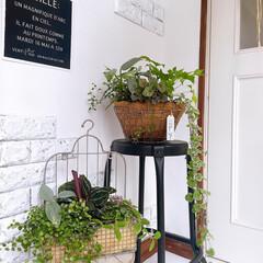 インドアグリーン/グリーンのある暮らし/グリーン/ブリコラージュ/寄植え/寄せ植え/... 最近のマイブーム♡  観葉植物のブリコラ…(1枚目)