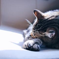 猫の日/LIMIAペット同好会/ペット/猫/にゃんこ同好会 昨日は猫の日🐈 世界中の猫たちみんなが幸…