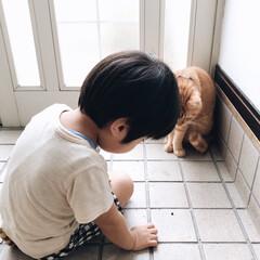 茶トラ/ニャンコ同好会/にゃんこ/猫部/子供と猫/LIMIAペット同好会/... ダンゴムシさん いるねぇ。 どうする? …