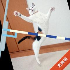 猫/LIMIAペット同好会 棒高跳びに挑戦にゃ😆