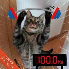 猫/LIMIAペット同好会 アスリートだにゃ🎵(1枚目)