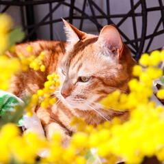 ガーデニング/花のある暮らし/ガーデン雑貨/ガーデニング雑貨/LIMIAガーデニング部/うちのガーデニング ミモザの日にミモザの花を撮ってみました!…(4枚目)